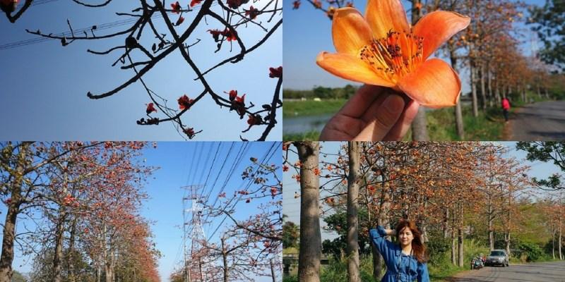 【彰化埤頭木棉花道】沿著東螺溪畔欣賞整條木棉花壯盛開放美景!彰化埤頭著名景點,超美木棉花道就在這裡。