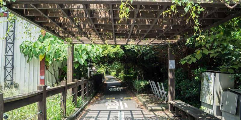 彰化埔心景點|如同進入龍貓隧道,埔心環鄉自行車道,欣賞田園綠意風光。