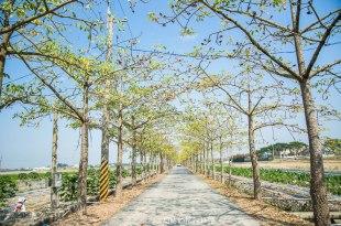 |台南‧白河|林初埤綠色木棉花道
