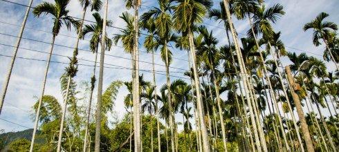 Nantou|南投‧水里|意外闖入槑休閒農業區旁的珍愛梅園,這裡還有高空彈跳可以玩