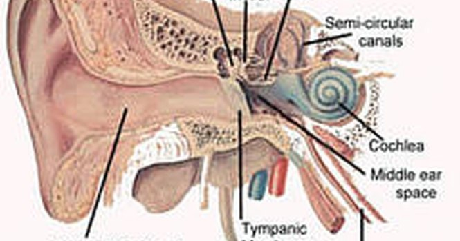 Sudden onset of tinnitus can mean OMG you've got a brain aneurysm and you're gonna die 2