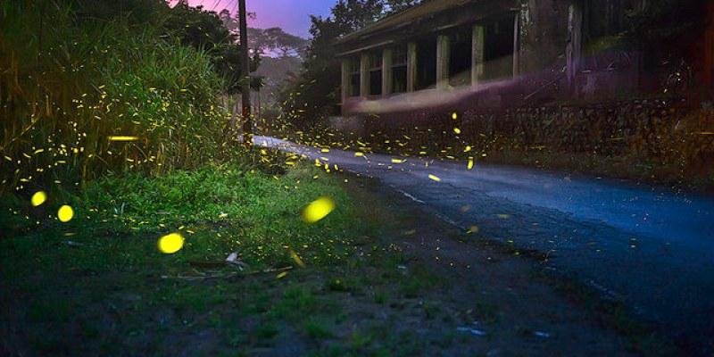【新竹】。地上星光點點浪漫飛舞著!becky帶你走一趟『北埔的螢火蟲之幕』
