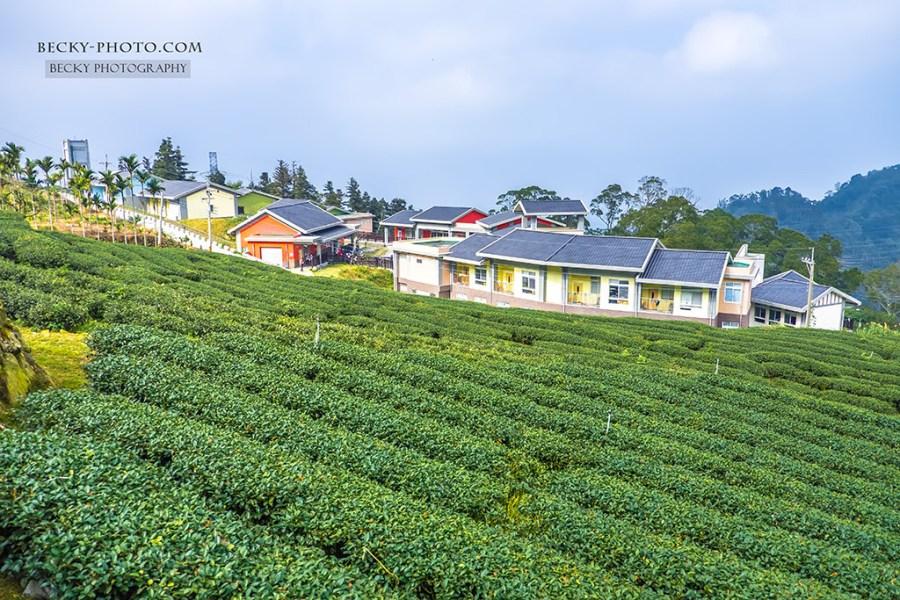 【雲林】。台灣造型古坑森林小學【樟湖生態中小學】彩色教室被茶園環繞著!