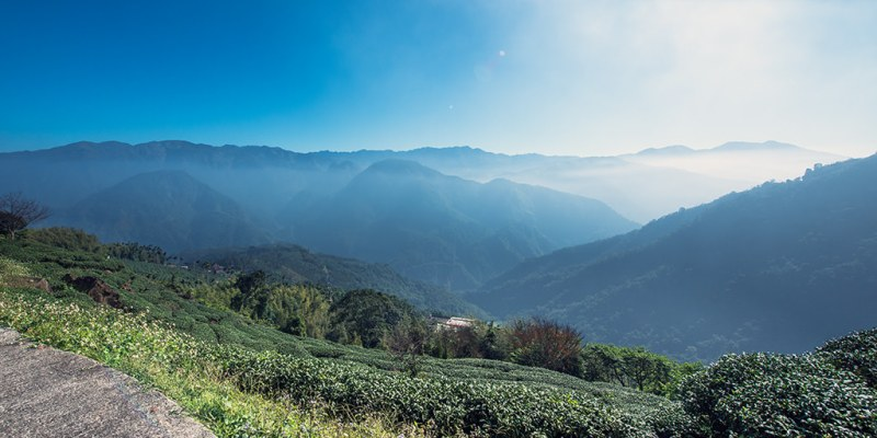 【雲林】。古坑茶園看日出雲海夜景~樟湖學校後山「後棟仔山觀景台」附交通