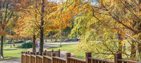 【台北】。搭台北捷運到大湖公園落羽松野餐、公園釣魚
