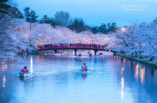 【青森】。日本東北櫻花祭 弘前城夜櫻壯觀! 弘前公園櫻花河美到不想離開~