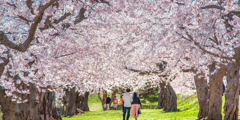 【北海道】。不能錯過的函館景點「星型五稜郭公園櫻花」 函館五稜郭塔賞櫻