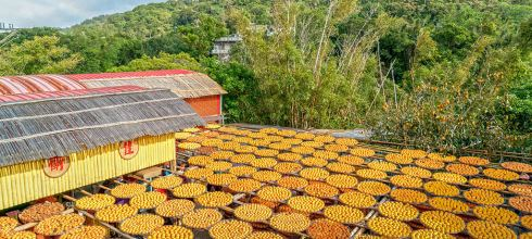 【新竹】。新埔柿餅拍攝 台灣11月新竹旅遊