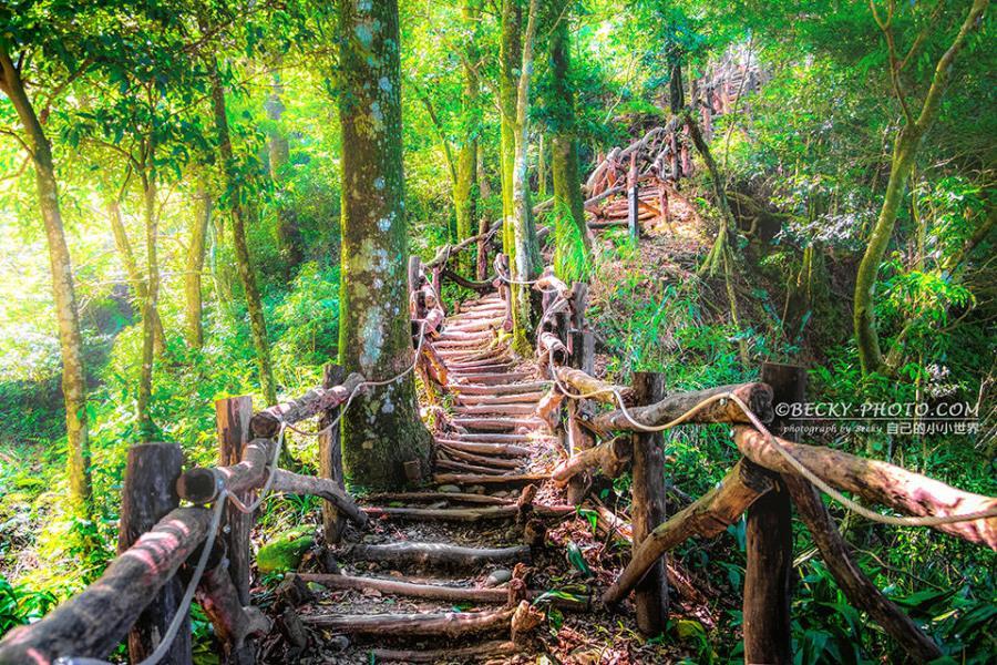 【台中】。第一次挑戰大坑4號步道頭嵙山風景美!台中大坑風景
