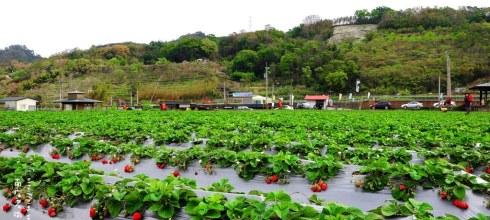 【苗栗】。草莓季 ≡ 大湖.南庄.泰安日出行