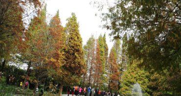 【彰化田尾景點推薦】菁芳園 - 美麗的落羽松是紅是綠決定了餐點的品質和服務的速度...