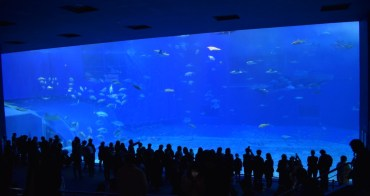 『2017沖繩』沖繩行不能錯過的水族館-沖縄美ら海水族館