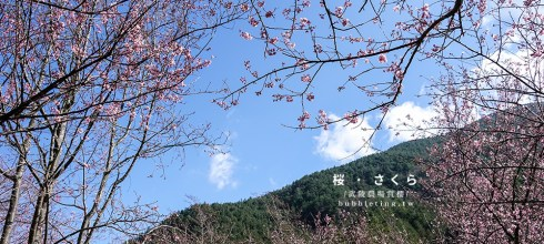 [旅遊] 武陵農場,櫻花盛開的山中美景
