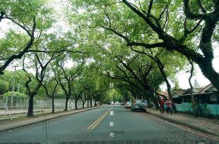 [旅遊] 綠色隧道之美,南投中興新村,大啖在地美食