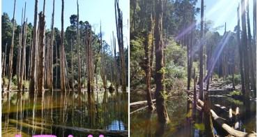 ▌南投鹿谷景點 ▌忘憂森林(雨季版)。一輩子一定要去的夢幻祕境