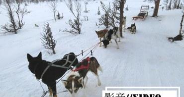影音|真實感受狗拉雪橇穿梭在Abisko極地森林裡的快感