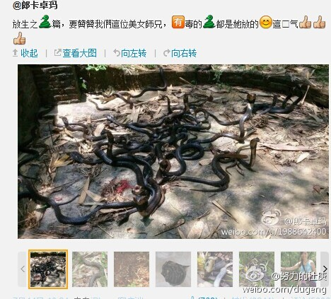 guangdong-chinese-woman-releases-poisonous-snakes-says-doing-good-01