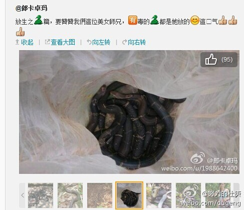 guangdong-chinese-woman-releases-poisonous-snakes-says-doing-good-04