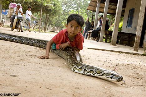 cambodian senmasa