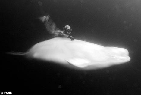 Julia Petrik whale