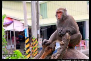 [台南]南化 烏山台灣獼猴保護區