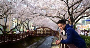 [釜山/鎮海] 慶尚南道【鎮海軍港節】櫻花季- 一生必訪超豪放韓國櫻花盛典!