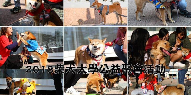 台南 柴犬大學狗狗聚會活動第二天 30隻柴柴一起來走春