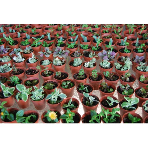 Medium Crop Of Miniature Fairy Gardens