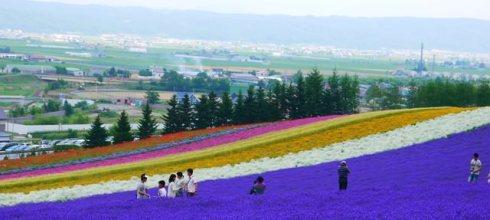 【熱血背包女】北海道家族賞花之旅 Day2 札幌→富良野→森之精靈露台→富田農場