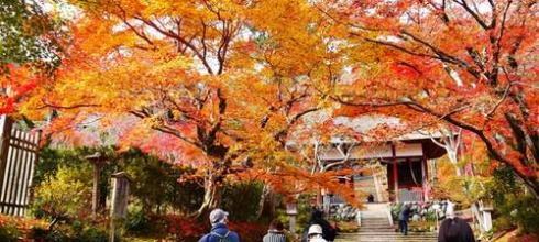 【熱血背包女】2011冬之京阪一個人小旅行DAY3-嵐山、金閣寺美到噴淚