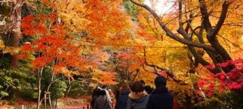 【一個人旅行】關西生日好忙之旅-day2 光明寺、醍醐寺、南禪寺、永觀堂、青蓮院夜間參拜