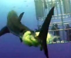 【衝撃映像:サメ】折の中の人にサメがまさかの遠距離攻撃www