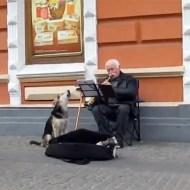 【萌え動画:犬】これが本当の音楽だ!!路上で歌う犬が儲けすぎてる件w