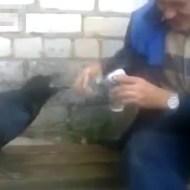 【おもしろ動画:動物】ボッチで飲んでると思ったらカラスの飲み友がいたw