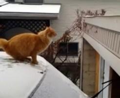 【可愛い:猫】ジャンプで渡ろうとした猫の悲劇・・・w半分も飛べてないw