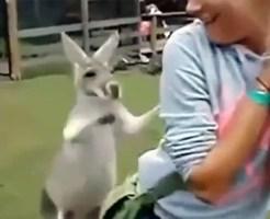 【おもしろ:動物】ニンゲンが動物に襲われる動画集wざまぁwww