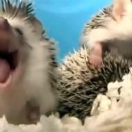 【萌え:動物】眠たくて仕方ない動物達を集めたったwww