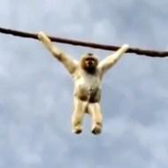 【動物】サルが人間に脱糞爆弾を投下・・・