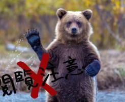 【グロ画像】もしも熊の食料になったら・・・