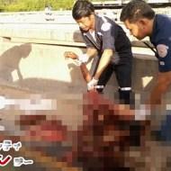 【グロ画像】車に轢かれ続け肉塊になってしまった元人間