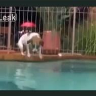 【犬衝撃】犬が巨大魚をハントする一部始終!