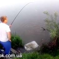 【閲覧注意】エサの代わりに猫を付けて釣りをするキチガイ・・・