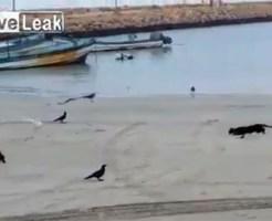 【猫動画】猫が本気で鳥を狩るとこうなる・・・