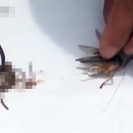 【蟲注意】虫の中から倍以上の蟲が出てきた・・・ ※動画有り