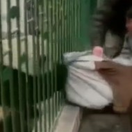 【衝撃映像】パンダが本気だしたら強すぎる件www
