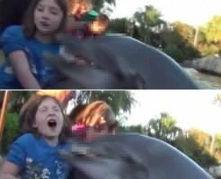 【閲覧注意】8歳の女の子がイルカに襲われる瞬間の映像