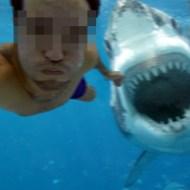 【グロ動画】サメに噛まれたらこうなる・・・・・ 閲覧注意