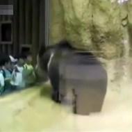 """【衝撃映像】日本の動物園でヘドバンする""""ヘビーメタル熊""""が話題にwww"""