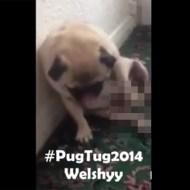 【衝撃映像】犬でもオ○ニーするんだな・・・これもうほとんどおっさんだろwww