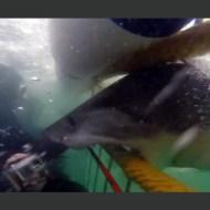 【衝撃映像】檻が壊れるほどの破壊力wサメミサイルがはんぱねぇwww